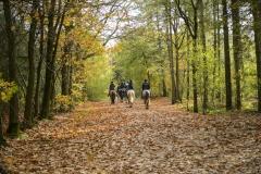 Paardrijden - Appelscha